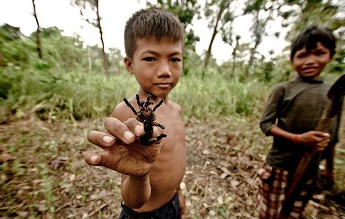 животный мир Камбоджи