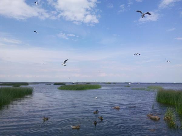 кронштадт кормление птиц
