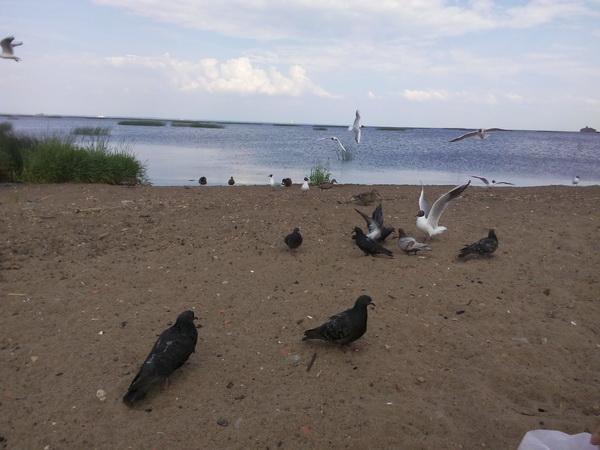 кронштадт кормление уток голубей чаек
