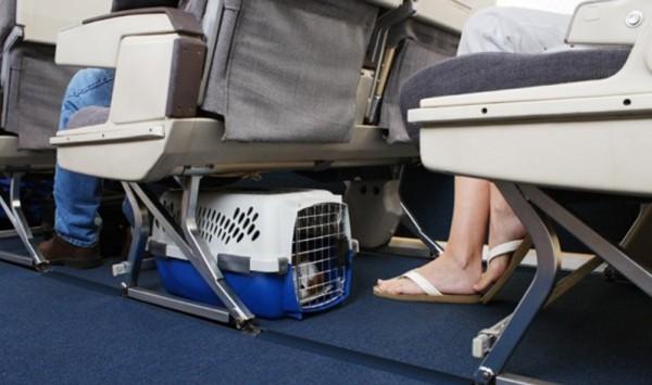 провозживотных в салоне самолёта