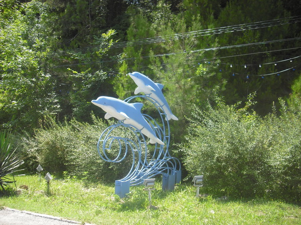 По дороге дельфины в сочи