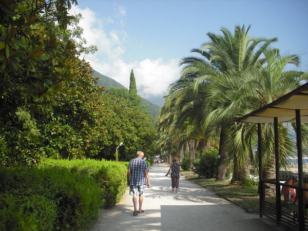 Абхазия Гагра пальмы