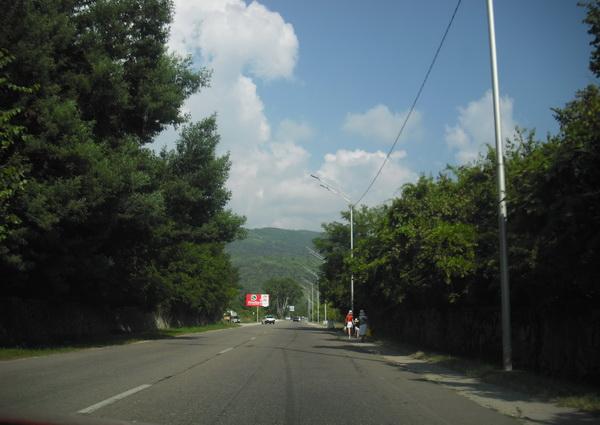 Абхазия деревья, зелень