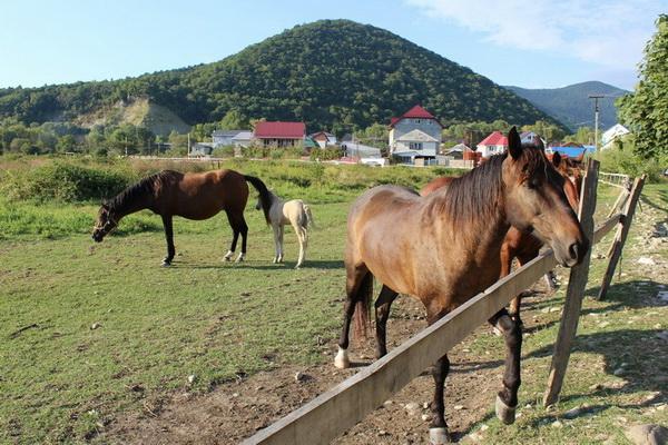 аше лошади краснодарский край развлечение