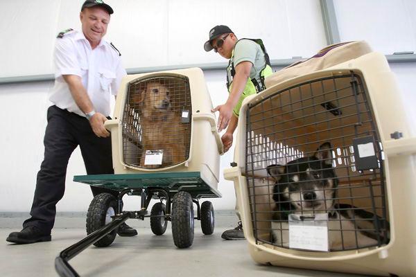 провоз животных в багаже авиакомпании Сибирь s7