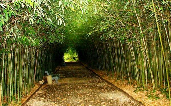 достопримечательности Абхазии 2017 ботанический сад