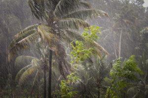 погода на фукуоке в сезон дождей какая