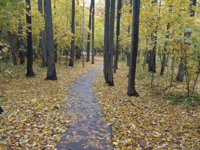 Пробежка по лесу - всегда приятна