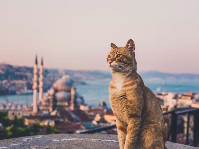 турция 2020 экскурсии онлайн стамбул