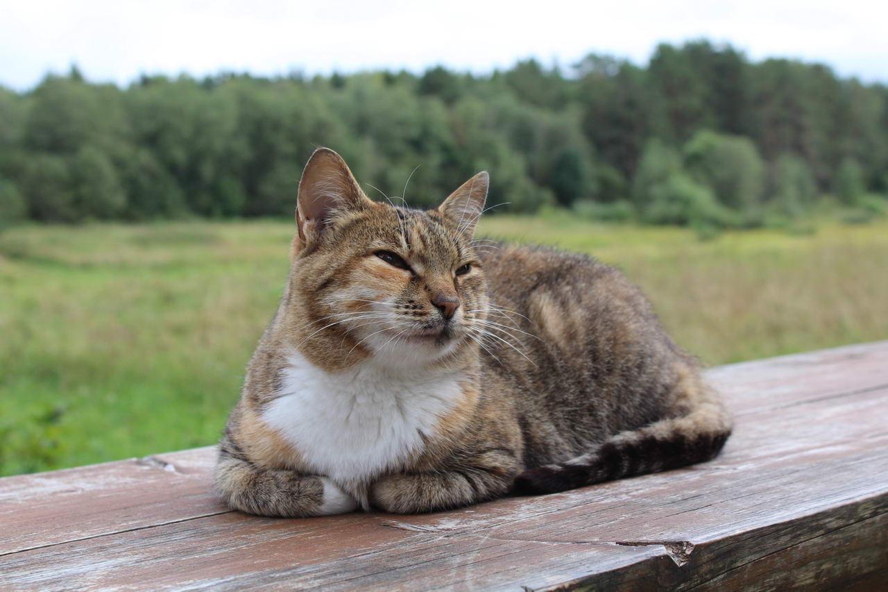 что посмотреть по дороге в питер и в карелию музей василево кот