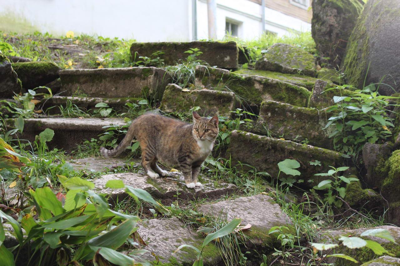 что посмотреть по дороге в питер и в карелию музей василево кот хранитель