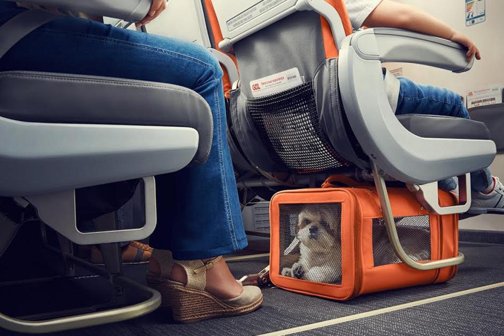 перевозка животных у авиакомпании s7 Сибирь с декабря 2020 под пассажирским креслом