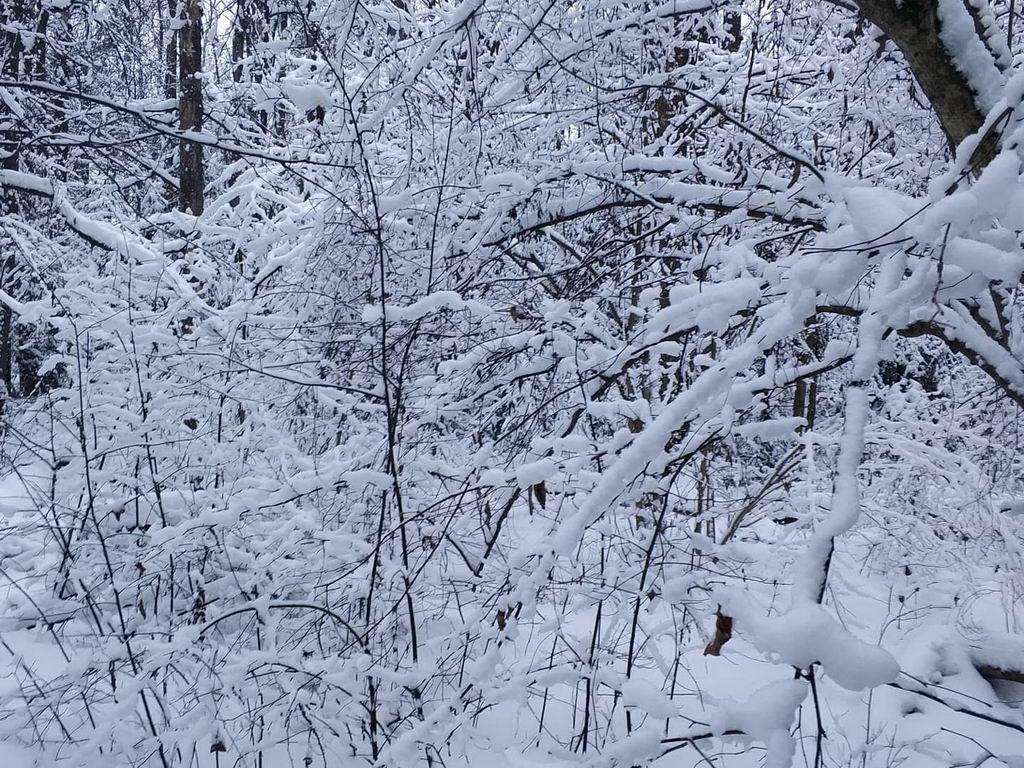 Зимний спорт - беговые лыжи