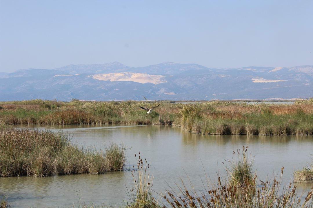 озера Акгол и Парадениз в Турции рядом с Ташуджу в ноябре 2020 года природный парк птиц