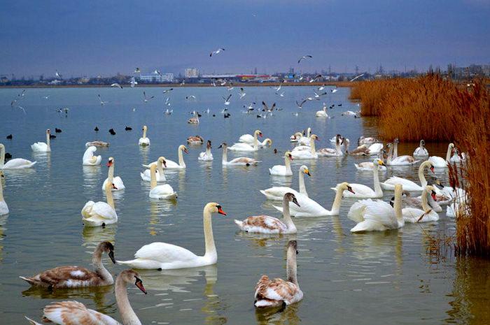 Что посомтреть в Крыму озеро лебеди евпатория