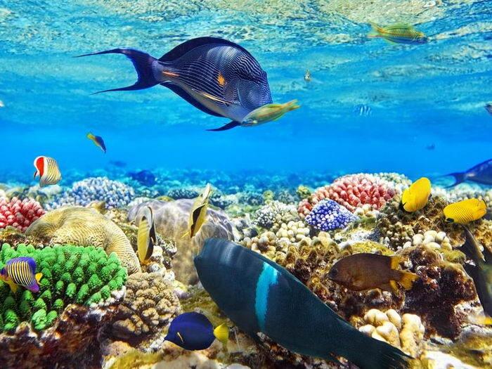 Красное море - экскурсии в египте